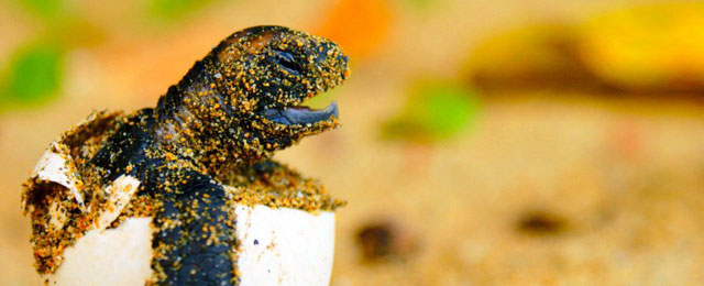 hatchling_dec_2011